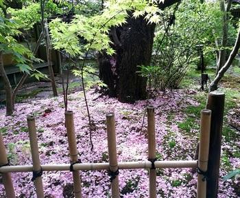 0429桜茶屋1.jpg