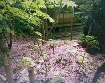 0429桜茶屋4.jpg