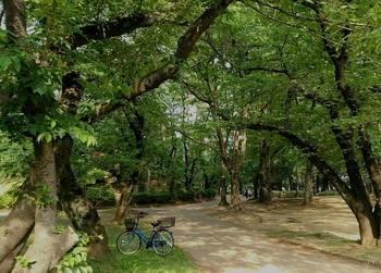0512公園2.jpg